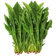 online-grocery-vegetables-store-london-windsor-toronto-yesgo-ca-Spinach